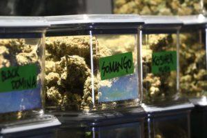 Cannabis Buds in a Airtight Container