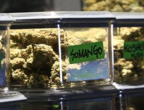 Best Ways To Store Your Weed | Marijuana Barcelona