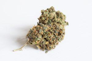 Weed Barcelona Amnesia Haze