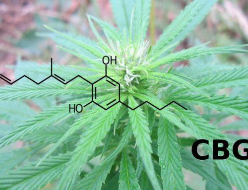 What is CBG? | Marijuana Barcelona